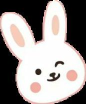 #可爱#兔子
