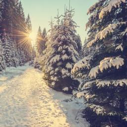 freetoedit snow winter wood woods
