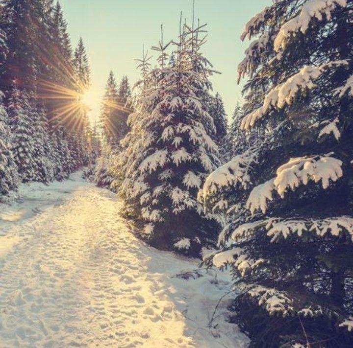 #freetoedit #snow #winter #wood #woods #tree #trees #clouds #sun #sunny #warm #green #luck #nature #white #beautiful_sky #beautiful_nature #sunrise_sunsets_aroundworld #aroundtheworld #around_the_world #art