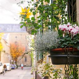 interesting streetstyle streetcorner street flowers