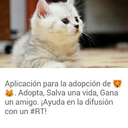 rt. aplicació rt