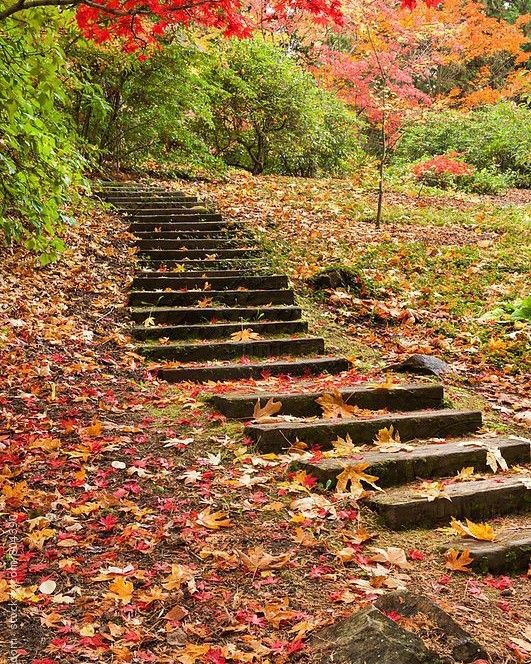 happy Saturday my beautiful Picsart friends!! #freetoedit #fall #leaves #november #photograph