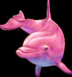 pinkdolphin dolphin fish pink freetoedit