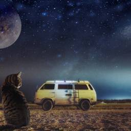 freetoedit ircvintagevan cat campervan night