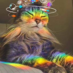 freetoedit galaxy cat rainbow ecspaceconqueror spaceconqueror покорикосмос космос space