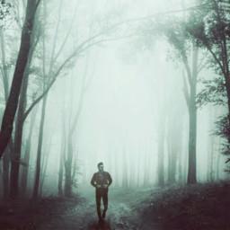 woods temperateforest walkingalone freetoedit
