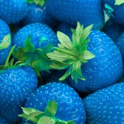 freetoedit blue strawberry strawberries blue_strawberry