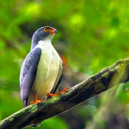 toucan nature costarica bird owl