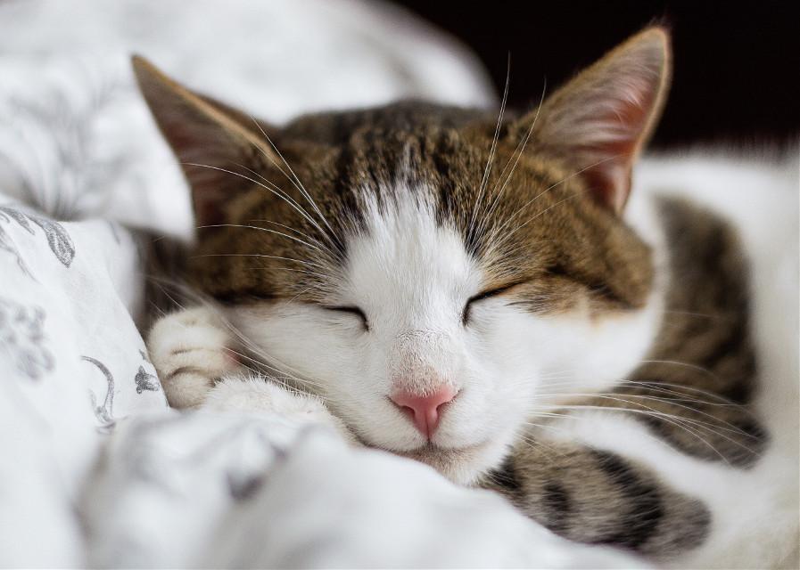 Purrrrfect edits wanted! Unsplash (Public Domain) #kitty #cat #cats #pet #animal #freetoedit
