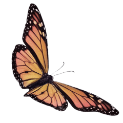 freetoedit aesthetic butterfly tumblr
