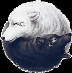 freetoedit wolf sun moon blackandwhite scblacknwhite