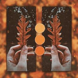 freetoedit autumn collage aesthetic vintage ccautumnmoodboard autumnmoodboard