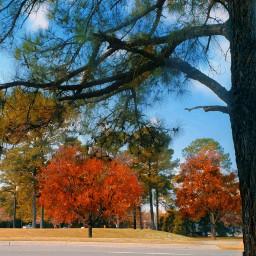 freetoedit autumn trees naturephotography