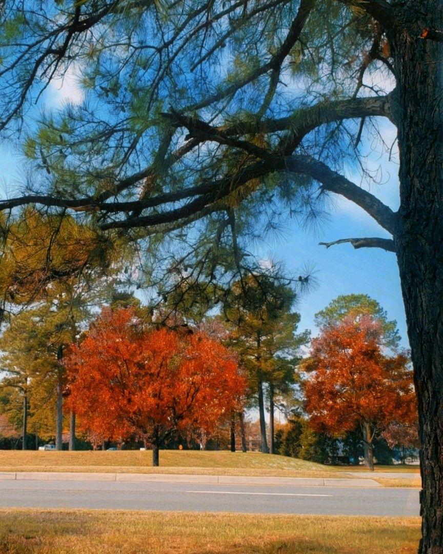 #freetoedit  #autumn #trees #naturephotography