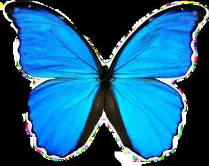 blue butterfly vsco tumblr trendy freetoedit