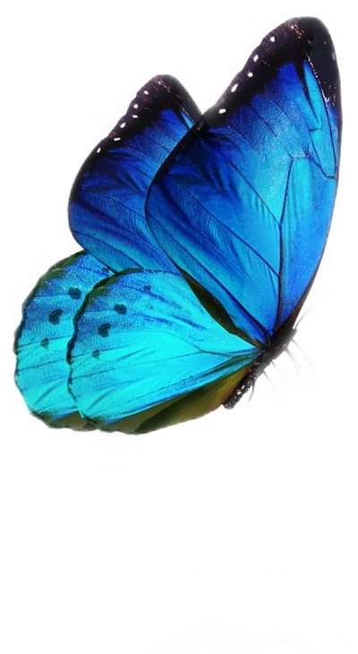 Blue Aesthetic Tumblr Butterfly Sticker By Cs Designs