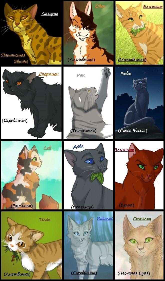Тест коты воители для девочек с картинками