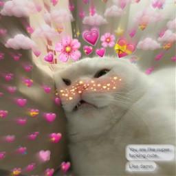 freetoedit cutiecat heartcrown white_cat white