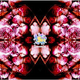 shazahom1 mirrormania mirrorart colours colourful