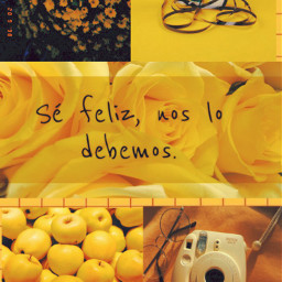 amarillo yellow floresamarillas yellowflowers vintage