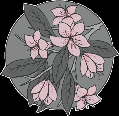 #flower #beauty #aesthetic #pink #grey