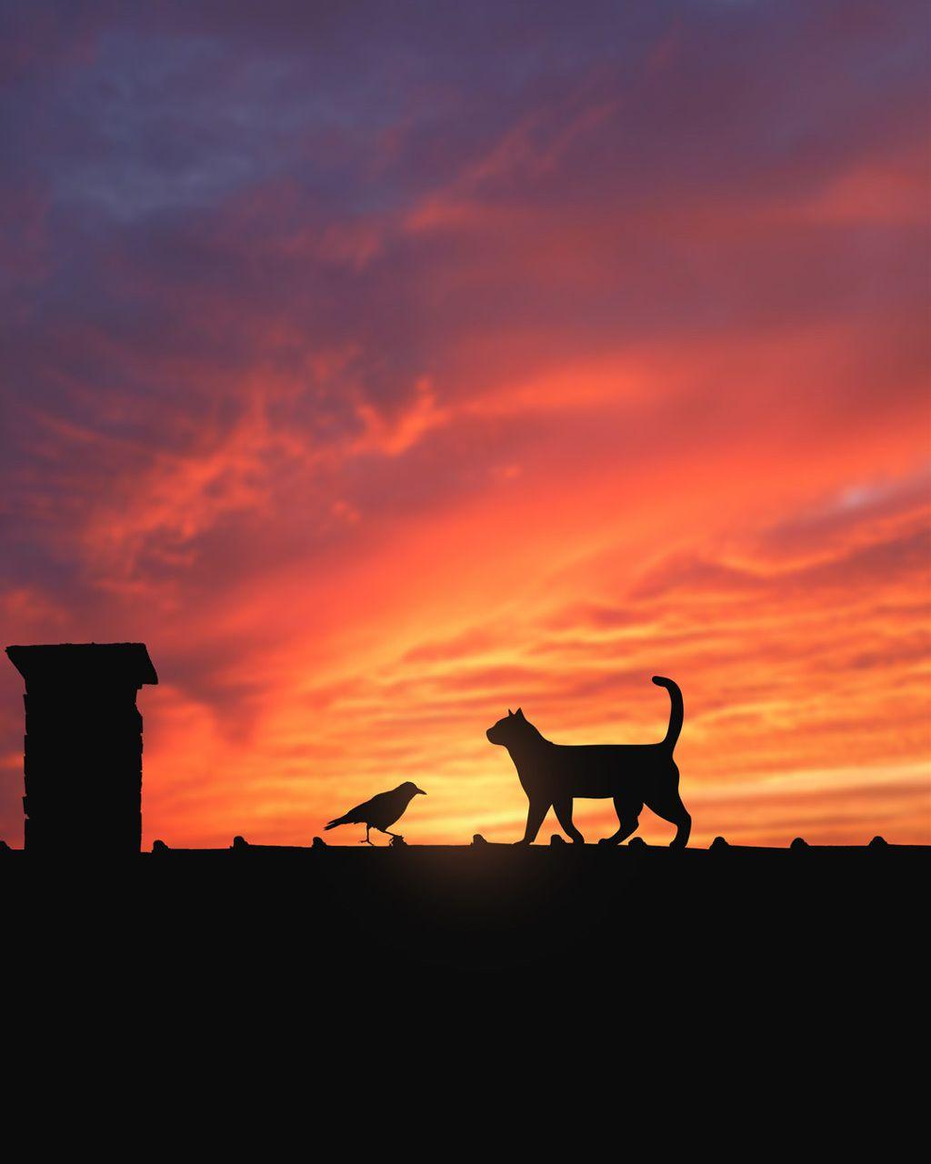 Making friends #freetoedit #sunset #colorful #cat