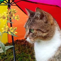 cat gatos aestetic tumblr lgbtq+🌈 freetoedit