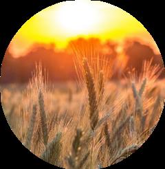 cereal circulo sol tumblr freetoedit scgrain grain