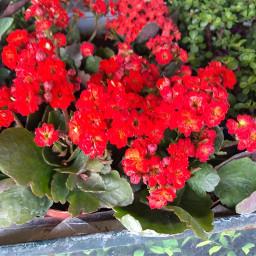 freetoedit plants plantas photography photographer
