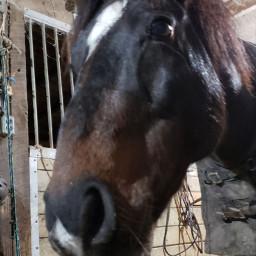 horse pony gibson fall barn