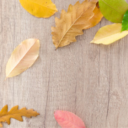 thanksgiving leaves autumn background backgrounds freetoedit