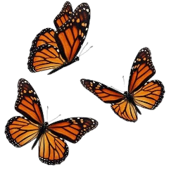 tumblr picsart butterfly borboleta freetoedit