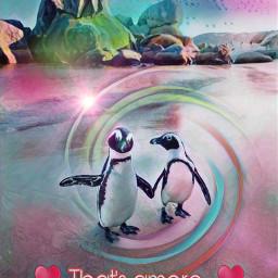 penguin thatsamore love freetoedit