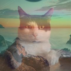 guineapig-cat