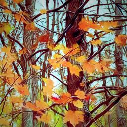 fallleaves falltrees fallcolors thanksgivingbreak
