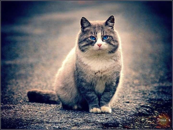 #cat #гарантсбережений