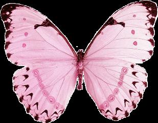 butterfly pink pastel softcore softaesthetic freetoedit