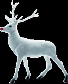 圣诞鹿 freetoedit