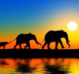 freetoedit elephant elefant selva sombra