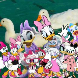 freetoedit daisyduck duck disney cartoon