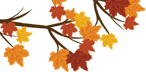 thankful freetoedit leaves fallleaves. tree