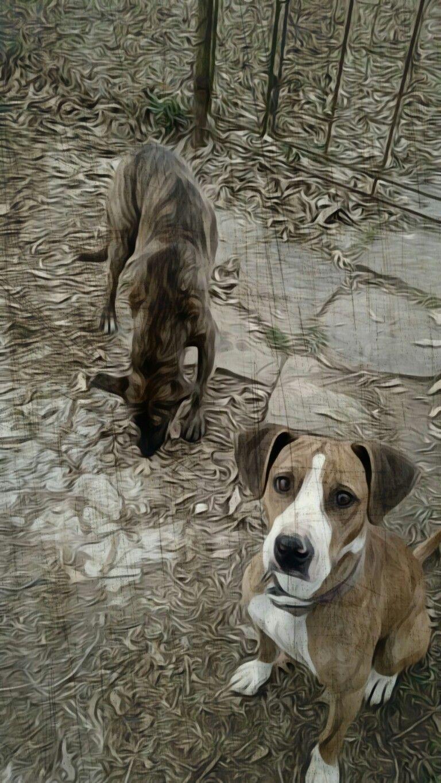 # dogs #sam/pearl  #OklahomaCountry