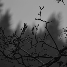 freetoedit photography blackandwhite novemberrain rainyday