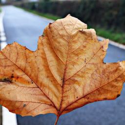 nature leaf loneleaf outandabout closeup freetoedit