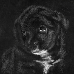 dog digitalart drawing portrait