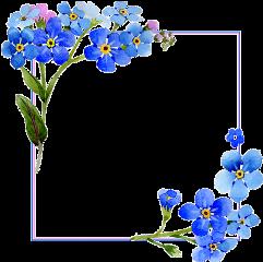 flower square floral frame blue freetoedit