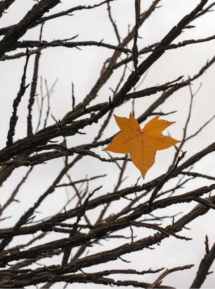 #nature #minimalisminnature #tree #nakedtree #treebranches #leaf #autumnleaf #popofcolor #fallminimalism #naturephotography   #freetoedit