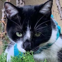 freetoedit neighborhood cat feline autumn