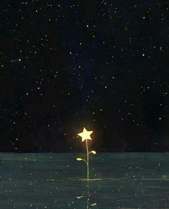 . لوهلة . تمالكت نفسي وقت الفراق لم أكن متوقع حدوث ذلك من الأساس لكن حدث .. و الآن أُعانى الإشتياق و أتمنى  .. موت  بعدك ..  كل إحساس عدا .. أول لحظة فيها أراك و ألقاك . ⚘⚘⚘⚘⚘⚘⚘⚘⚘⚘⚘⚘⚘⚘⚘⚘⚘⚘ #flower #moon #night #light #dream #star   #freetoedit