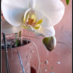 gardenflowers originalphoto flower nature